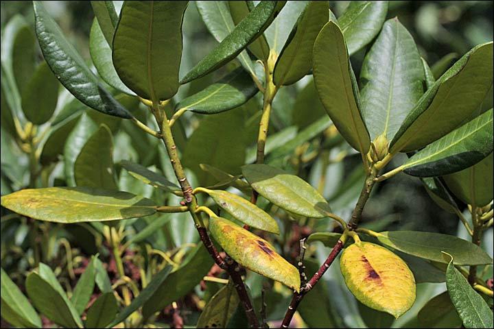 S nilit for Mon amaryllis ne fait que des feuilles